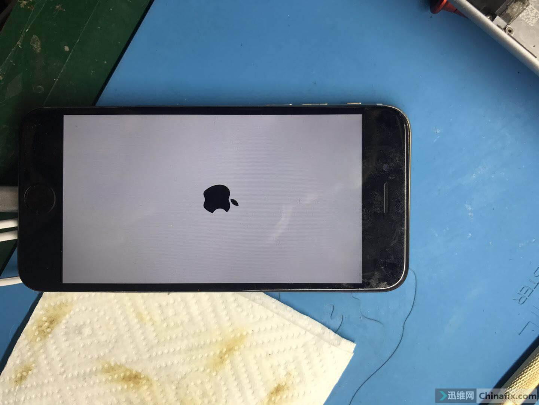 白苹果.jpg